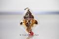 Ganesha Thai Amulett (Phra Pikkanet) Sii Thon
